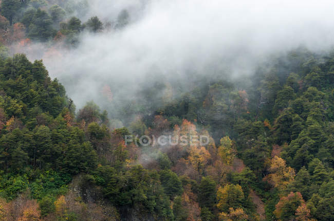 Autumn fog over forest — стоковое фото