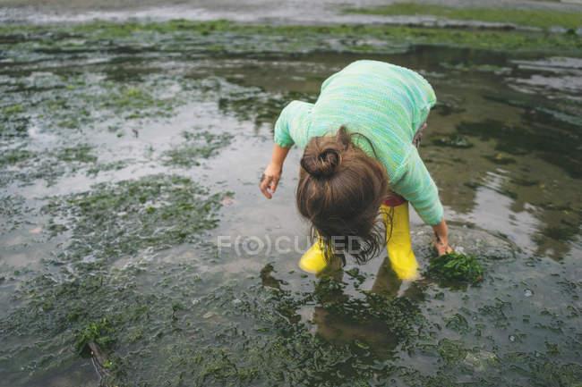 Mädchen, die Kommissionierung Algen im flachen Wasser — Stockfoto