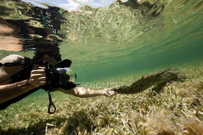 Fotógrafo, segurando a cauda de crocodilo debaixo d'água — Fotografia de Stock