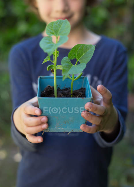 Girl holding potted been sprouts — Stock Photo