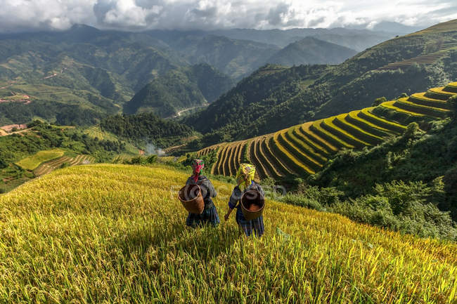 Rice fields on terraced of Mu Cang Chai — Stock Photo