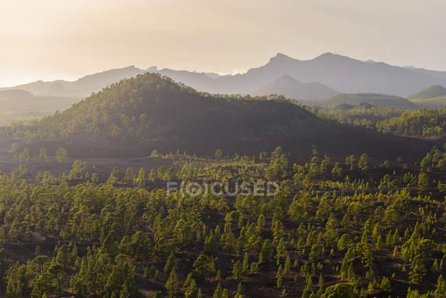 Tree covered volcanic landscape — Stock Photo