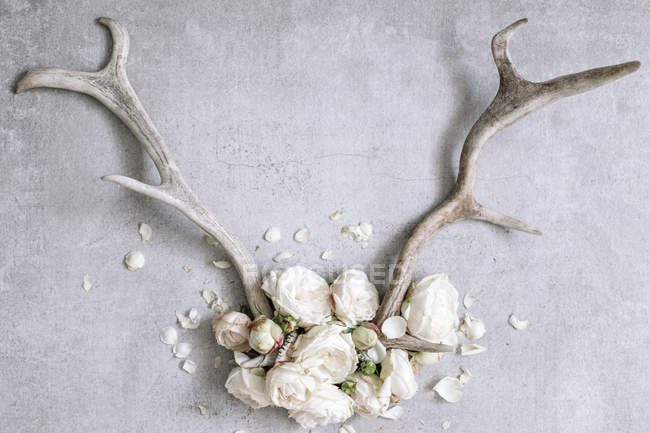 Рога с белыми пионами — стоковое фото