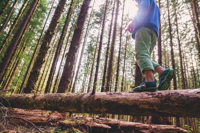 Хлопчик, Прогулявшись через стовбур дерева — стокове фото