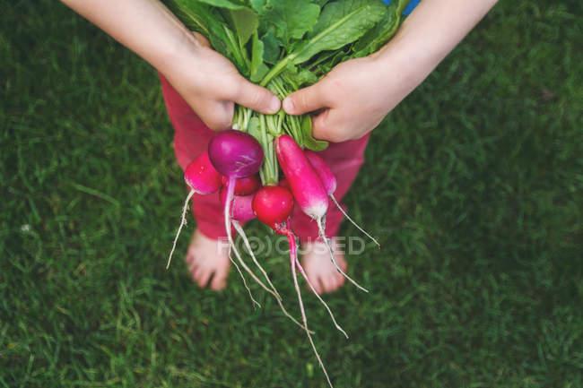 Boy holding bunch of fresh radishes — Stock Photo
