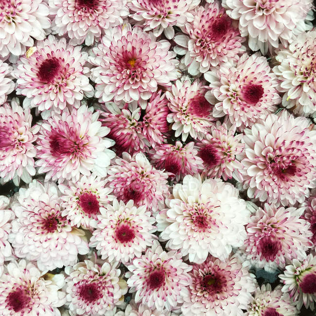 Close-up of flowers — Stock Photo