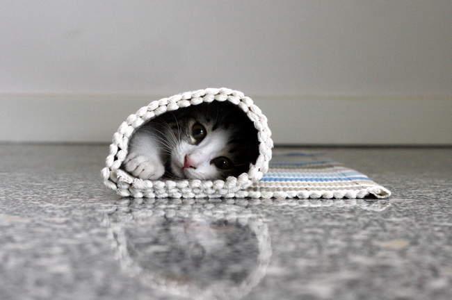 Gattino in tappeto arrotolato — Foto stock