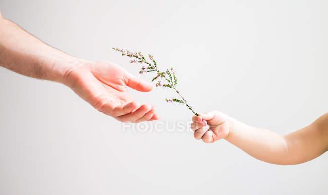 Child handing flower — Stock Photo