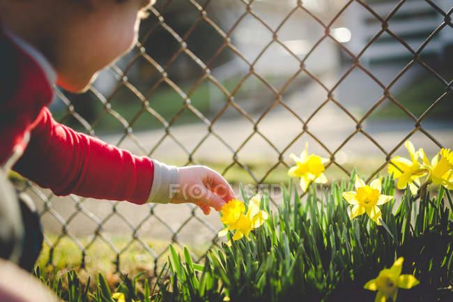 Rapaz a apanhar narciso — Fotografia de Stock