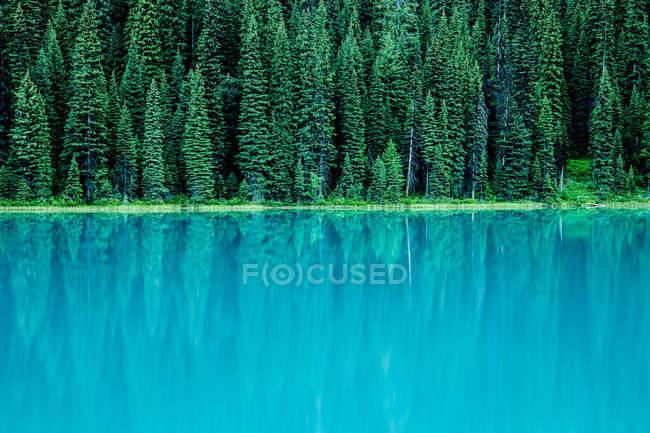 Arbres à feuilles persistantes reflétant dans le lac — Photo de stock