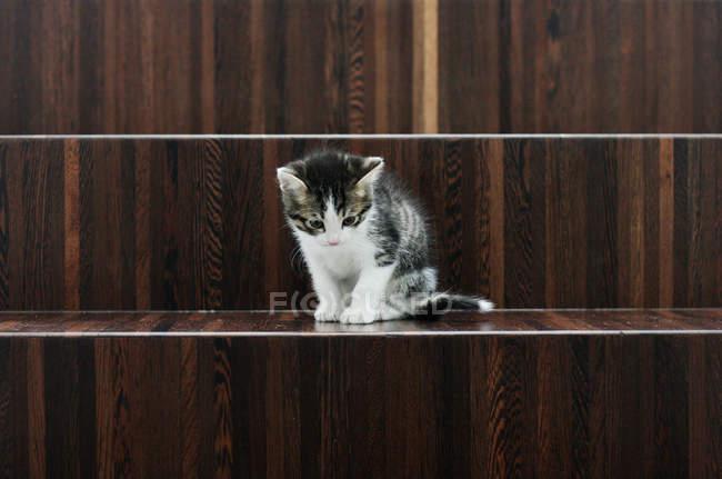 Gattino seduto su scale di legno — Foto stock