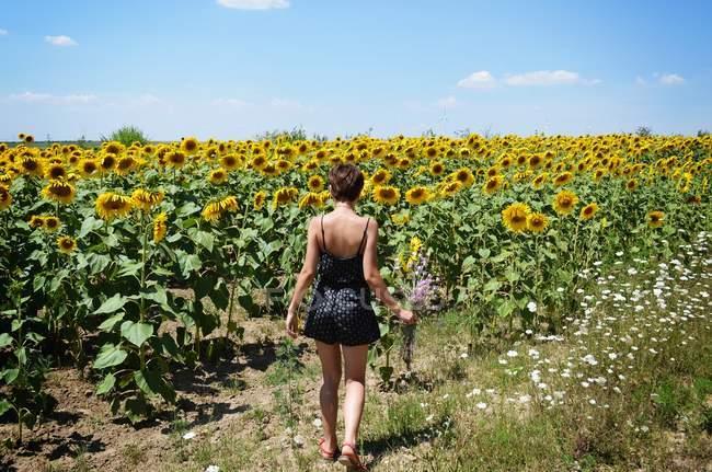 Mujer joven en campo de girasoles - foto de stock