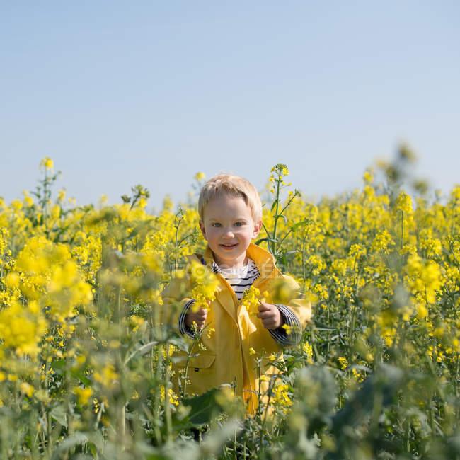 Мальчик, стоящий на поле желтых цветов — стоковое фото