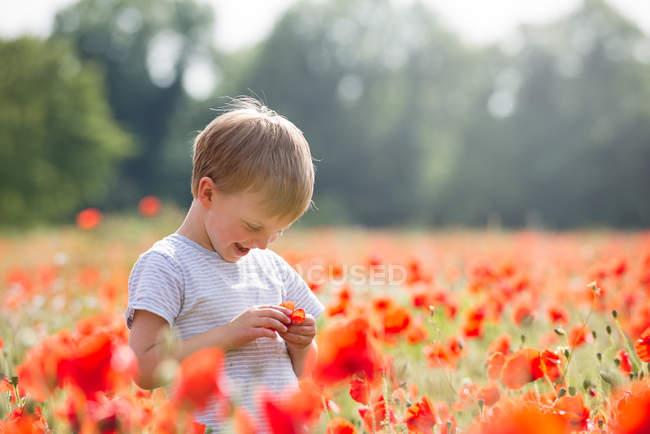 Мальчик стоит на маковом поле — стоковое фото