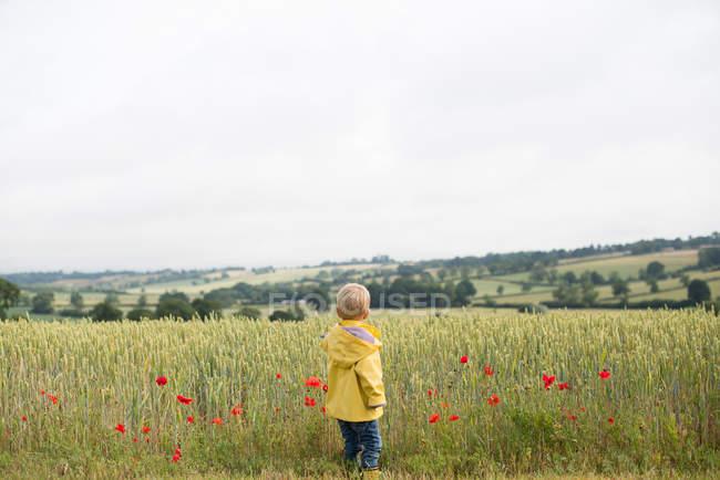 Boy standing in a wheat field — Stock Photo