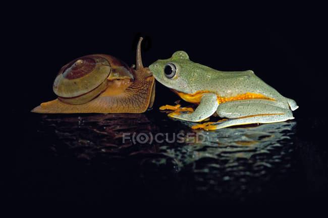 Lumaca che bacia rana di albero — Foto stock