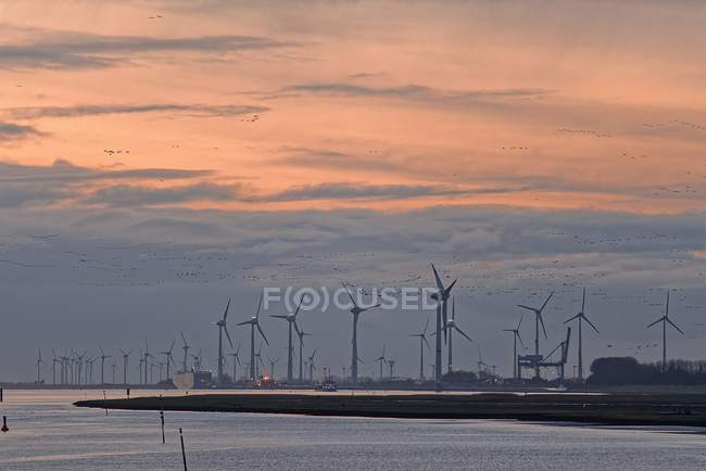 Wind turbines in row in harbor — Stock Photo