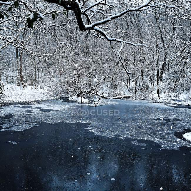Frozen lake in forest — Stock Photo