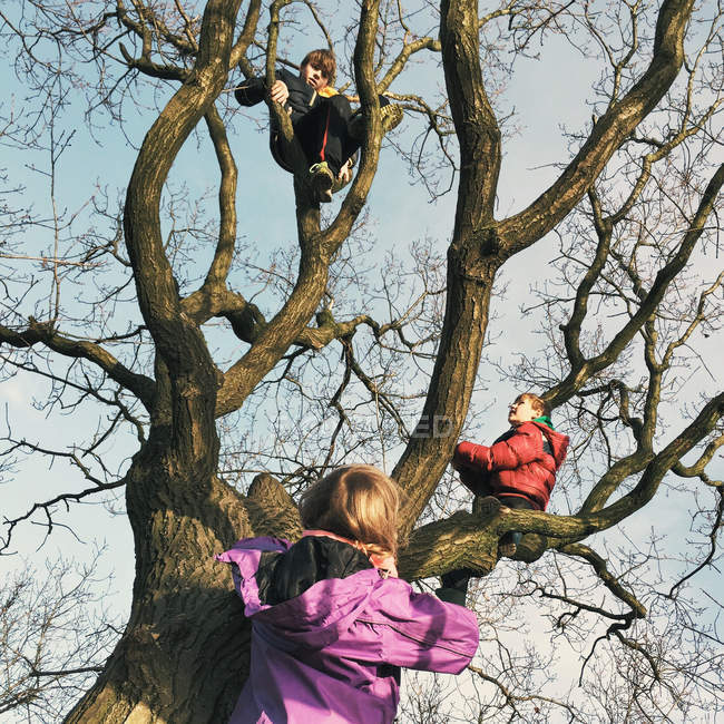 Three children climbing tree — Stock Photo