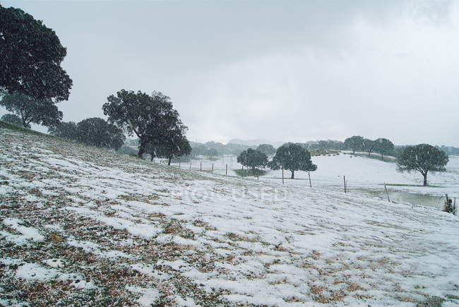 Snow covered landscape — Stock Photo