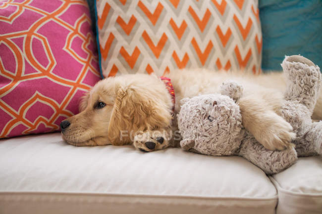 Золотистый ретривер щенок с плюшевым мишкой — стоковое фото