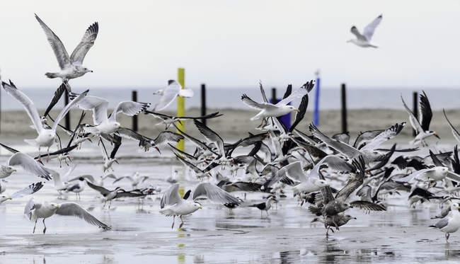 Assemblez-vous de mouettes sur la plage — Photo de stock