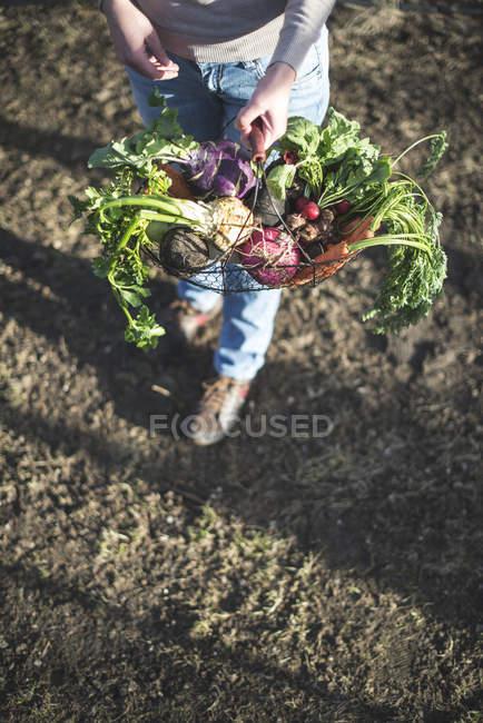 Mujer y cesta con verduras . - foto de stock
