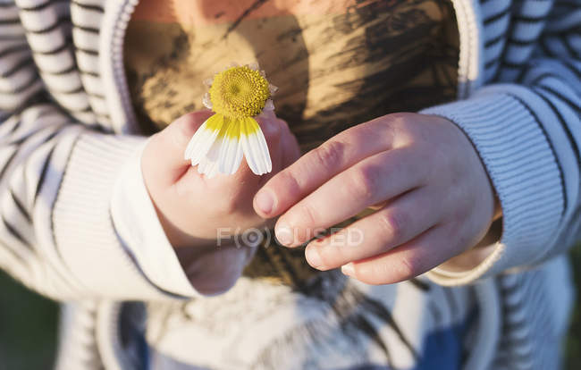 Boy picking daisy petals — Stock Photo
