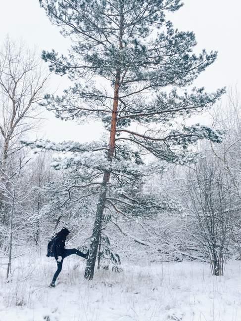 Man kicking snow off tree — Stock Photo