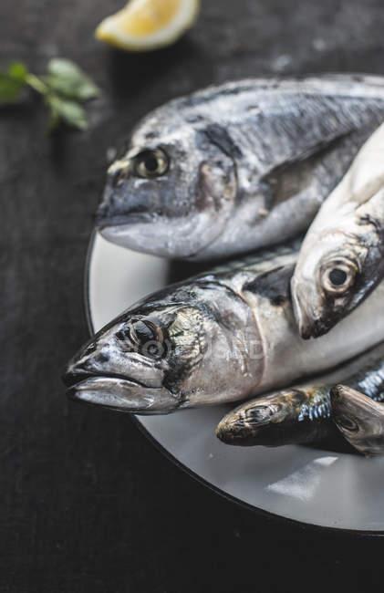 Сырой рыбы в пластине — стоковое фото