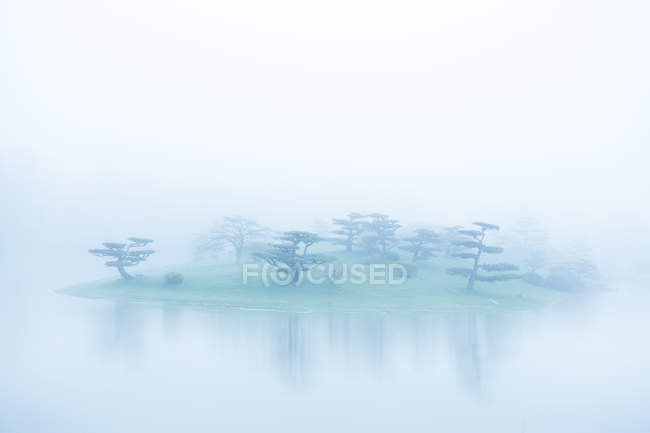 Trees in fog on island — Stock Photo
