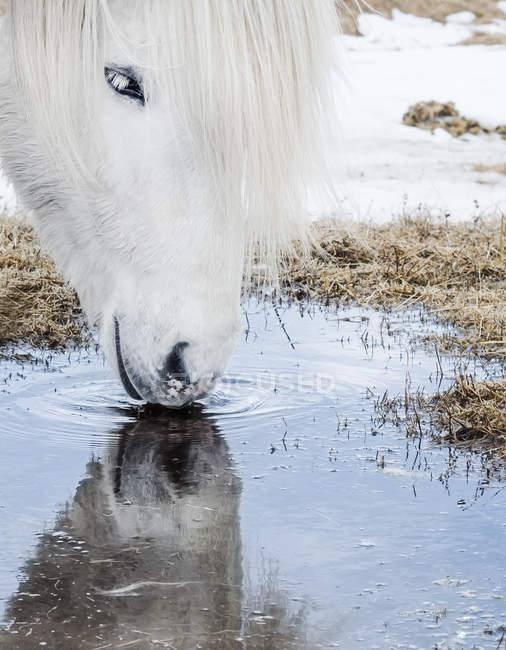 Agua potable para caballos - foto de stock