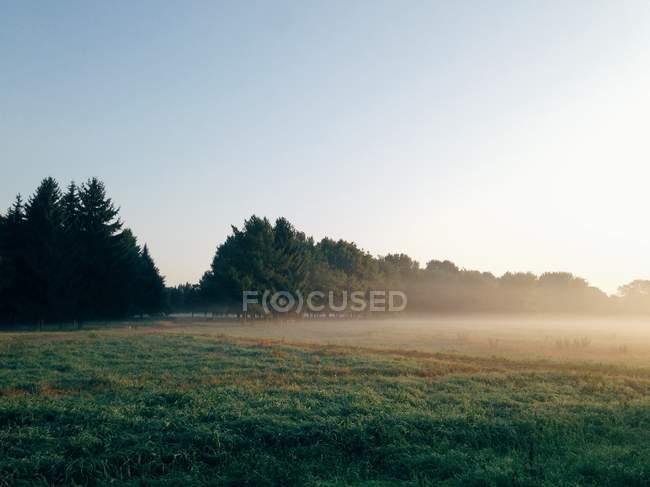 Rural landscape in fog — Stock Photo