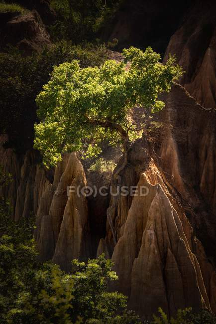 Tree growing on mountain — Stock Photo