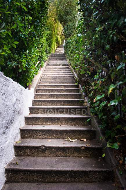 Лестница поднимается в сад — стоковое фото