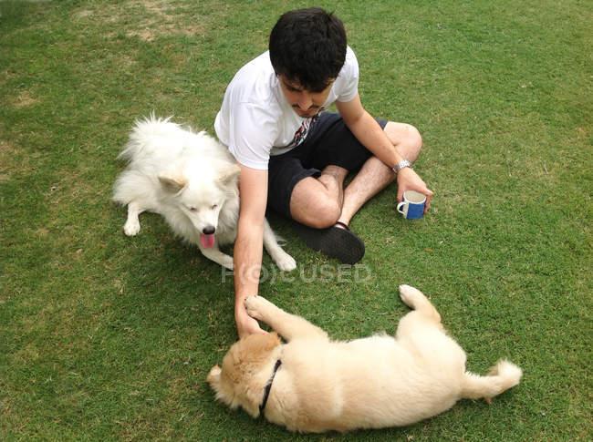 Человек, играющий с собаками — стоковое фото