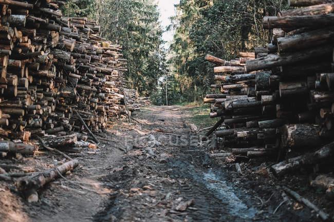 Route à travers la forêt bordée de bois — Photo de stock