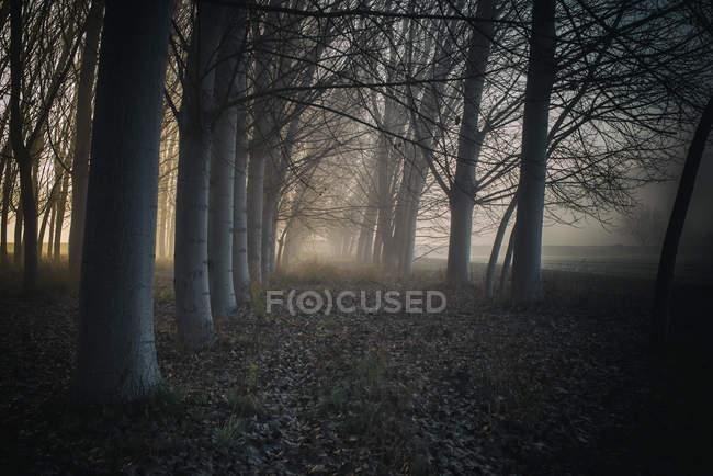 Шлях у ліс в туман — стокове фото