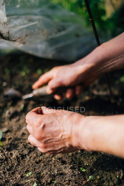Close-up of woman gardening — Stock Photo
