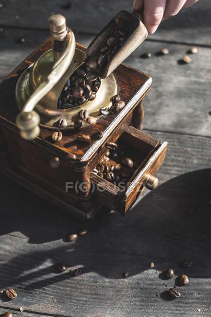 Женщина кладет кофейные зерна в дробилку — стоковое фото