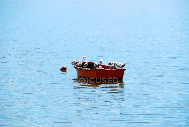 Gabbiani appollaiati sulla barca — Foto stock