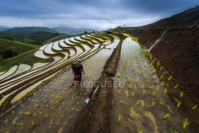 Mulher que trabalha no campo do Terraced arroz paddy — Fotografia de Stock