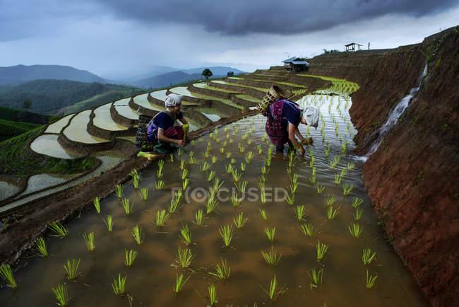 Femmes sur la terrasse rizière — Photo de stock