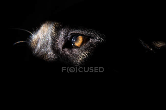 Close-up shot of dog's eye — Stock Photo