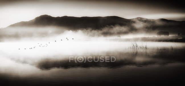 Bandada de aves volando sobre el lago, imagen monocroma - foto de stock