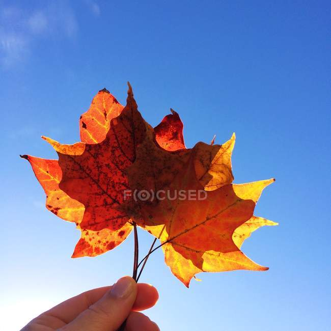 Cropped image of hand holding autumn leaves against blue sky — Stock Photo