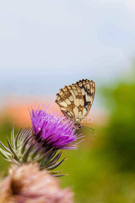 Close-up of Butterfly sitting on pink flower — Stockfoto