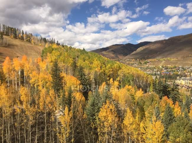 Vue panoramique sur la forêt paysage, Vail (Colorado), l'Amérique, Usa — Photo de stock