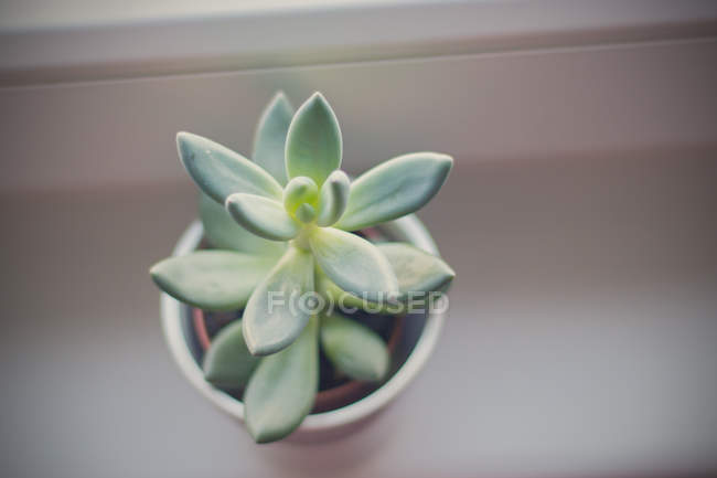 Elevated view of succulent plant on window sill — Stockfoto