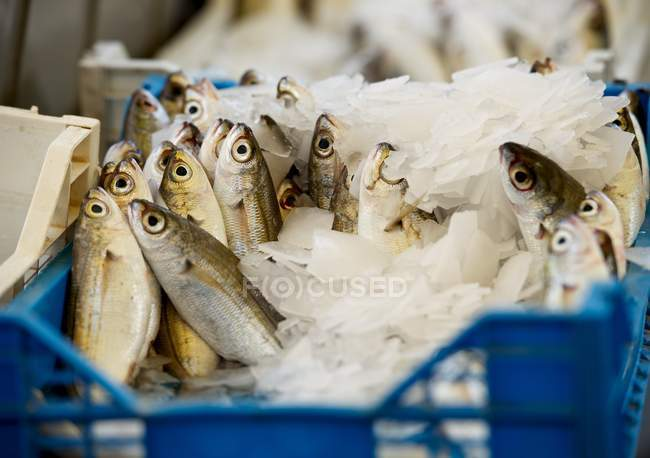 Closeup view of Fresh fishes in street market — Stockfoto